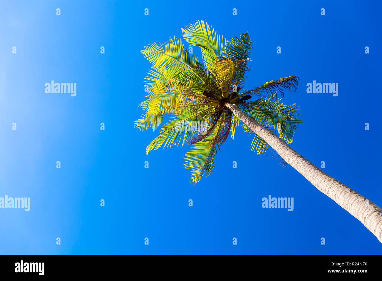 palm trees on the tropical beach - Stock Image