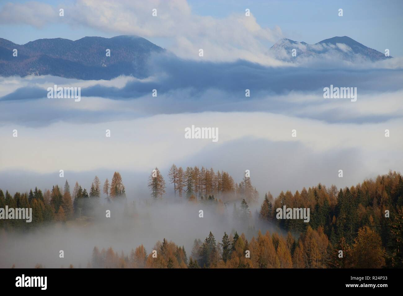 Dense fog above the valley, in autumn. Some firs are to be seen. Seen from above, in the Limestone alps national park, Upper Austria, Europe. - Stock Image