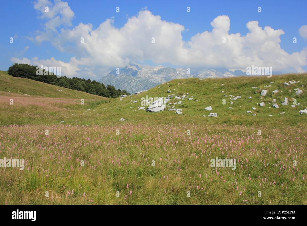 Colorful alpine meadow, Mount Kobariski Stol, Julian Alps, Alpe Adria trail, Slovenia, central Europe - Stock Image