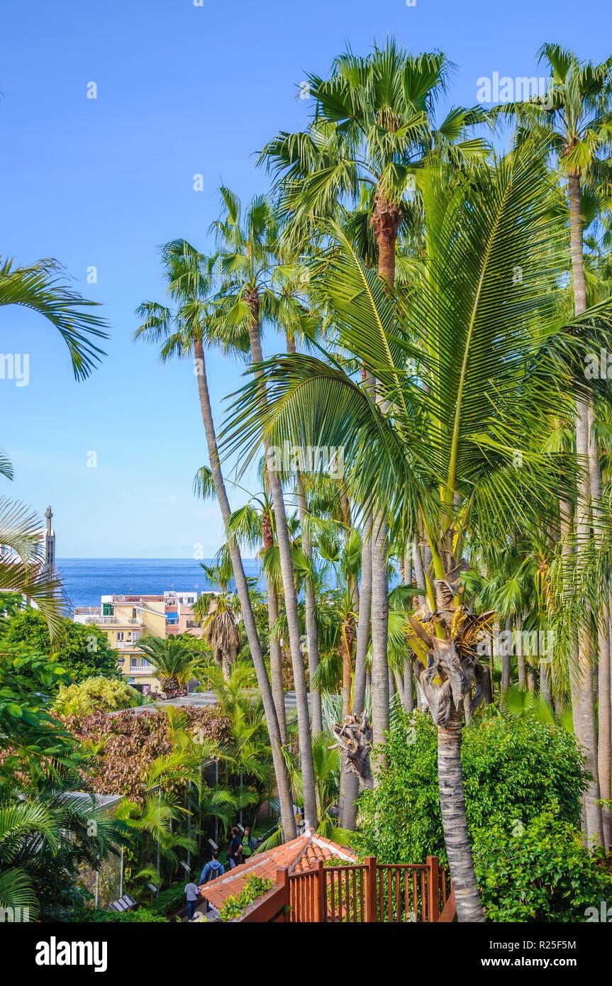 tall-palms-in-loro-parque-tenerife-on-ca