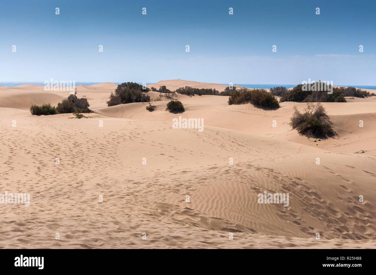 Coastal dunes in Maspalomas beach, Gran Canaria Island, Canary Islands, Spain. Stock Photo