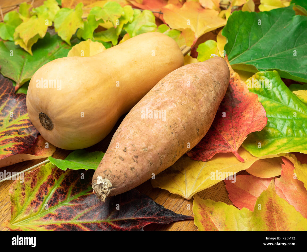 A butternut squash and a sweet patato (seasonal vegetable) are placed on autumn leaves in green, red, orange and yellow colours. Close-up. Stock Photo