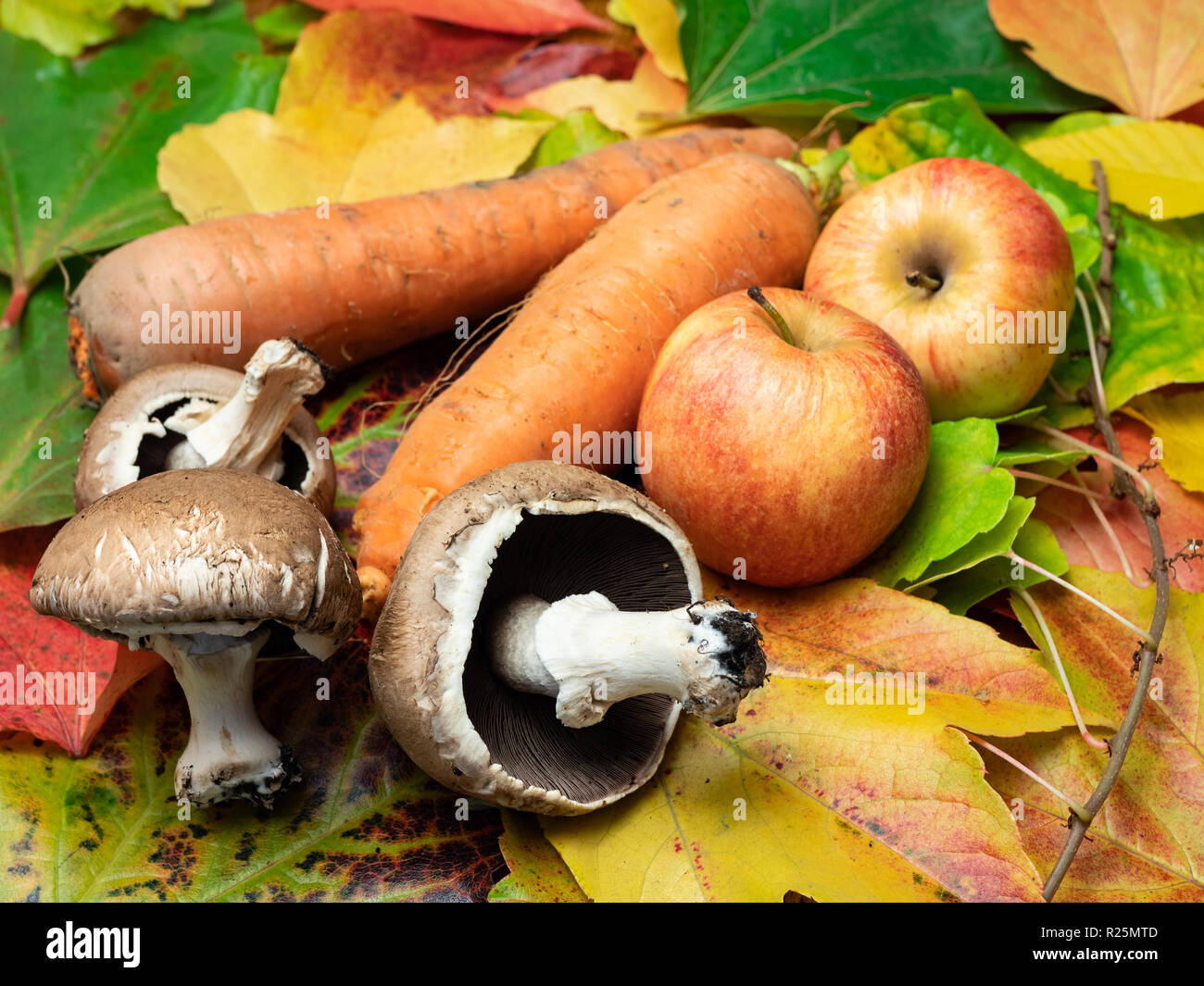 Seasonal vegetables placed on coloured autumn leaves. There are mushrooms, apples and carrots. Stock Photo