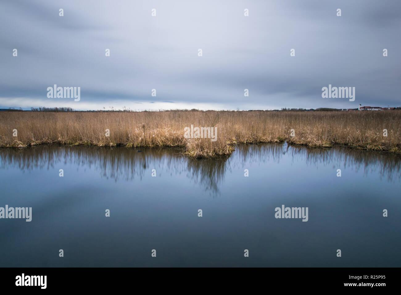 Schilf spiegelt sich in ruhigem See Stock Photo