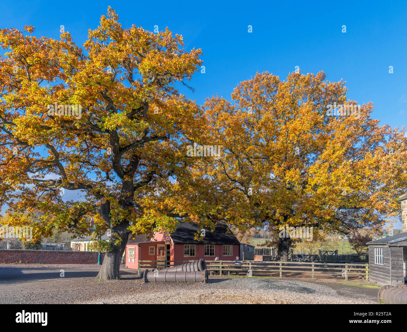 Autumn colours in the Pit Village and Colliery, Beamish Open Air Museum, Beamish, County Durham, England UK - Stock Image