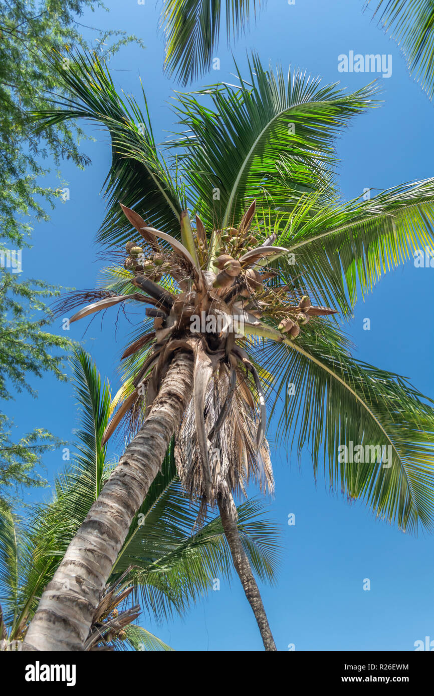 View at palm tree on the island of Mussulo, Luanda, Angola... - Stock Image