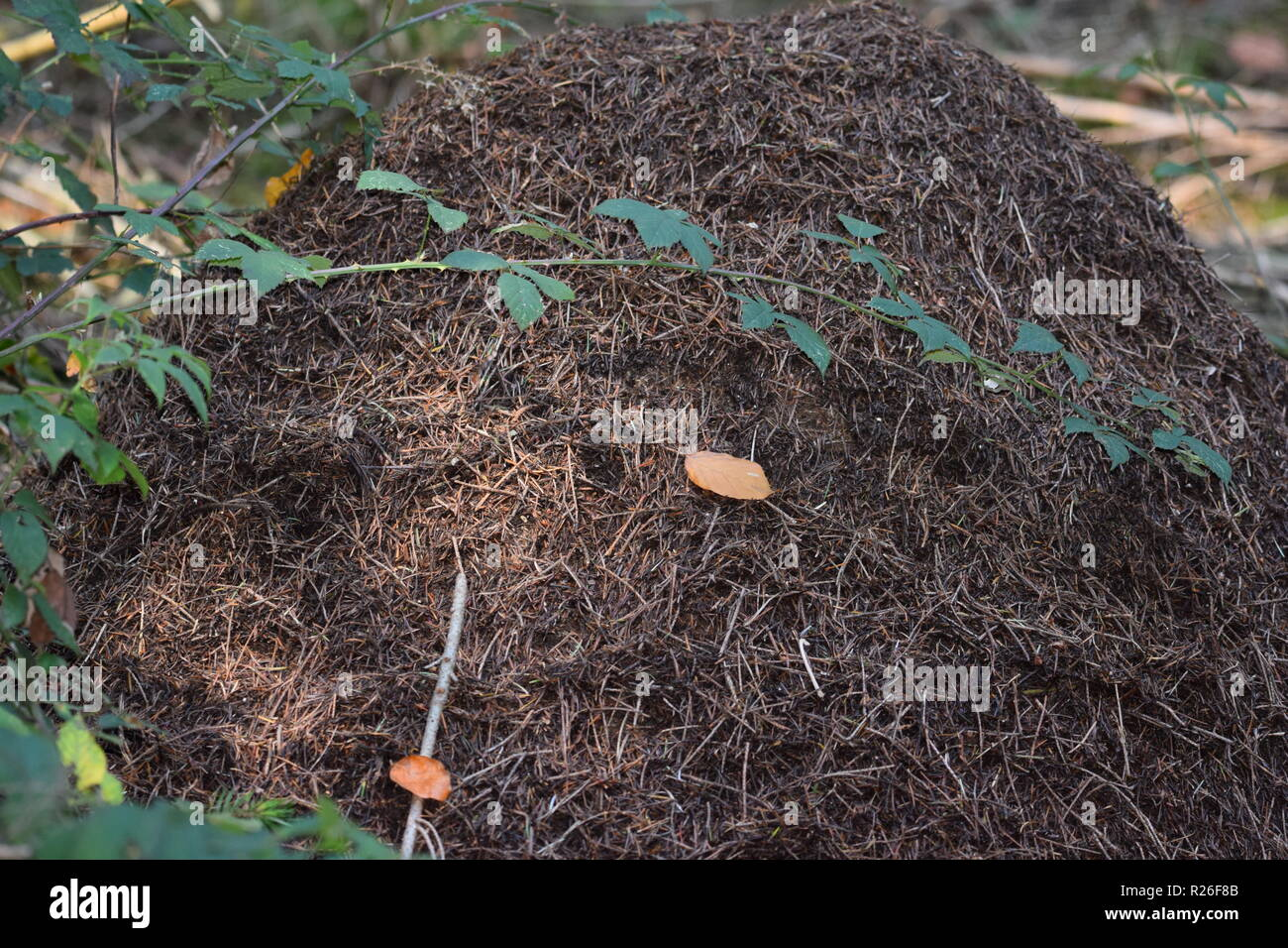 Ant Colonies Stock Photos & Ant Colonies Stock Images - Alamy