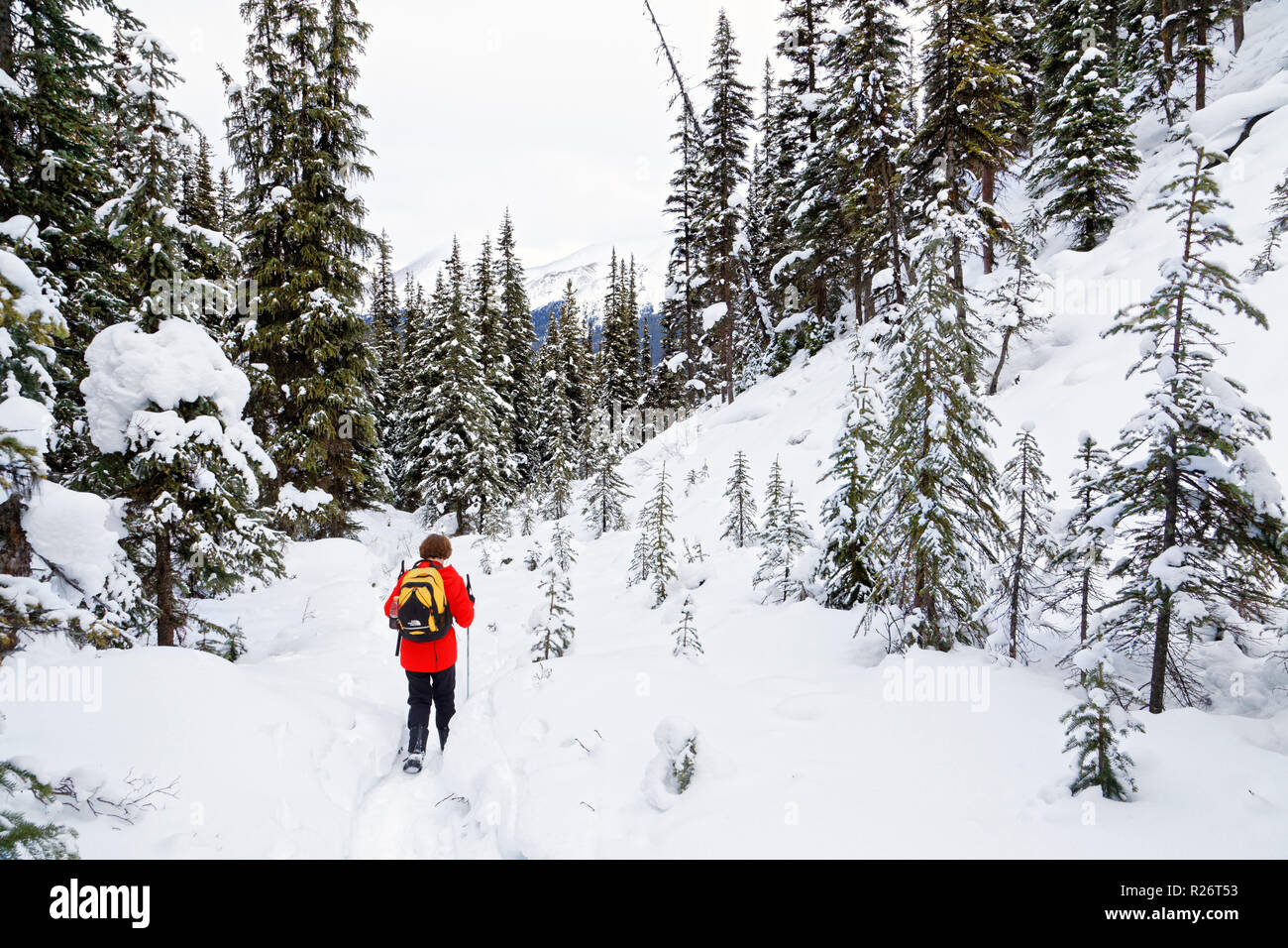 42,755.09678 woman person cold winter hiking Upper Moose Lake Trail, Jasper Park, day packing hiker in snowy winter conifer forest with hills, hilly - Stock Image