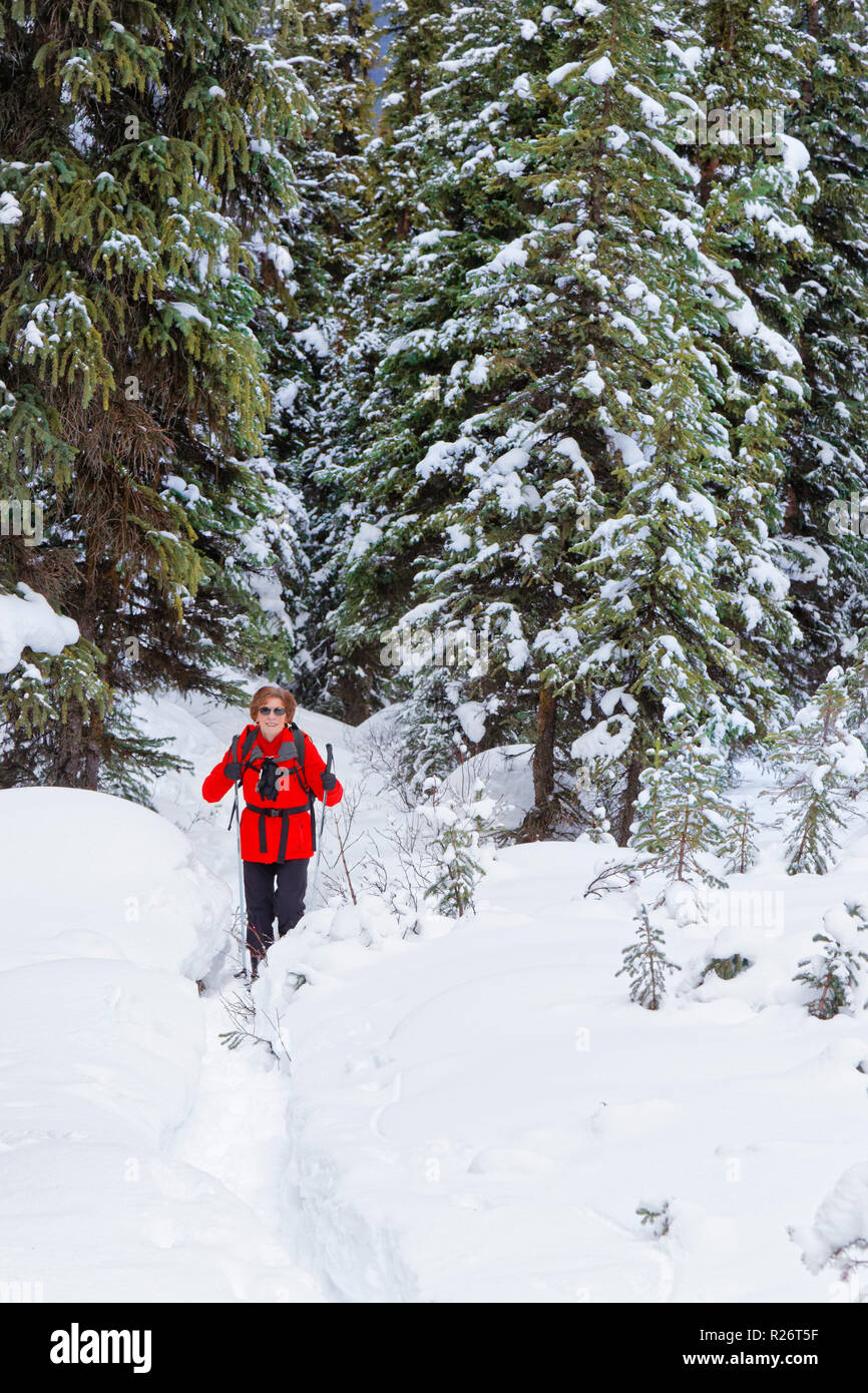 42,755.09684 woman person cold winter hiking Upper Moose Lake Trail, Jasper National Park, day packing hiker in snowy winter conifer forest landscape - Stock Image