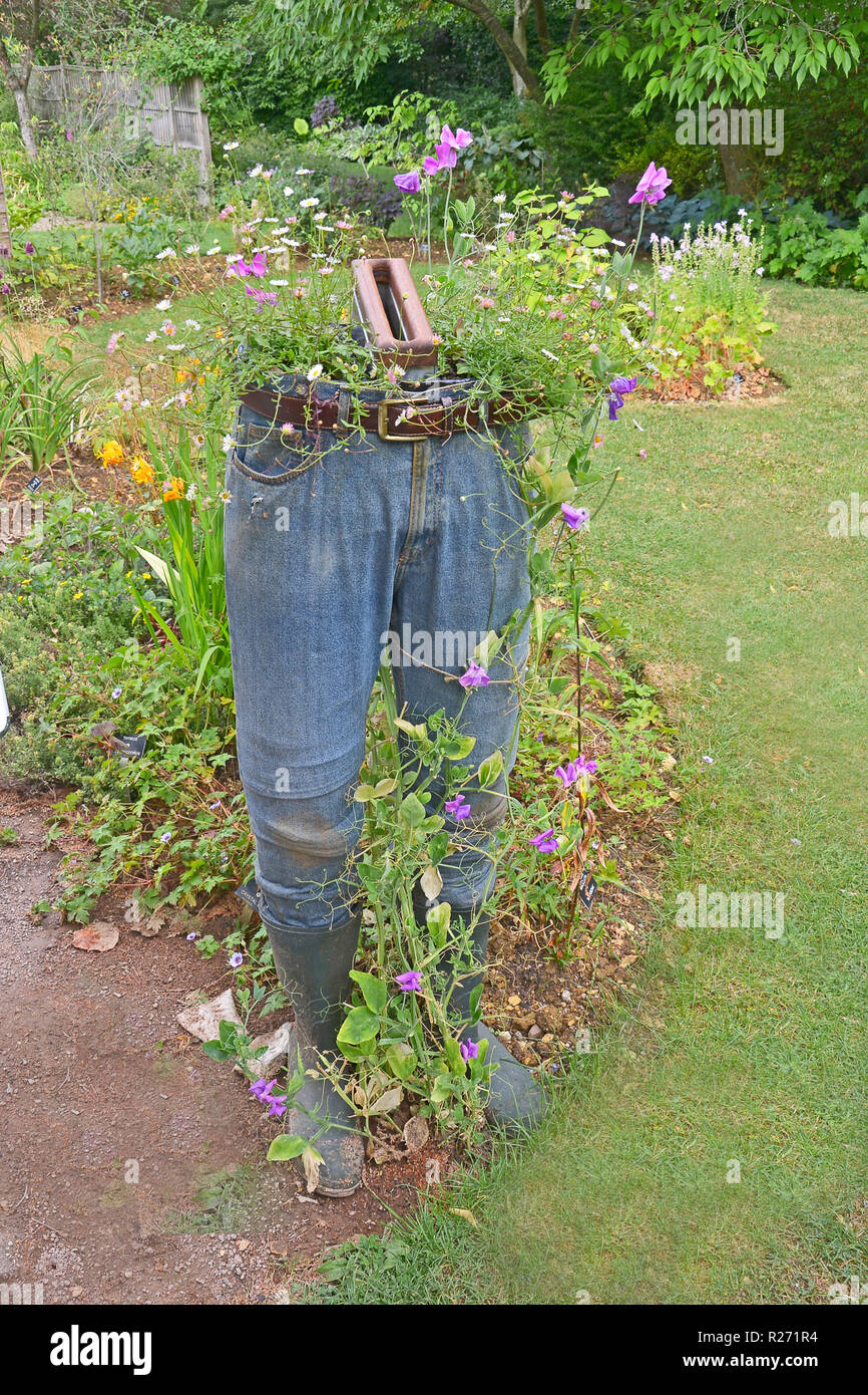 An unusual plant container made from old jeans and containing sweet peas Stock Photo