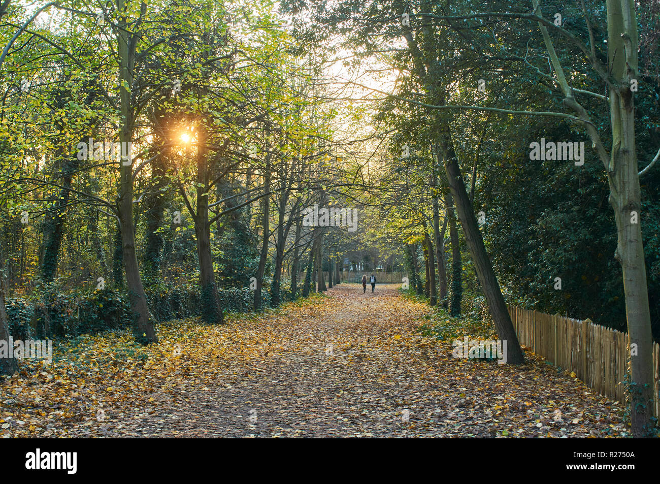 Path in Holland Park in the Royal Borough of Kensington & Chelsea, London UK, in November - Stock Image