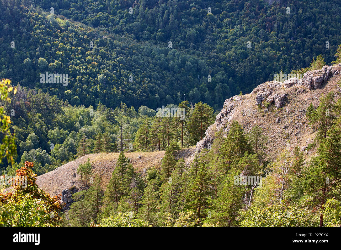 Thick green wood on the hillside. Forest conservation area. Natural Park. - Stock Image