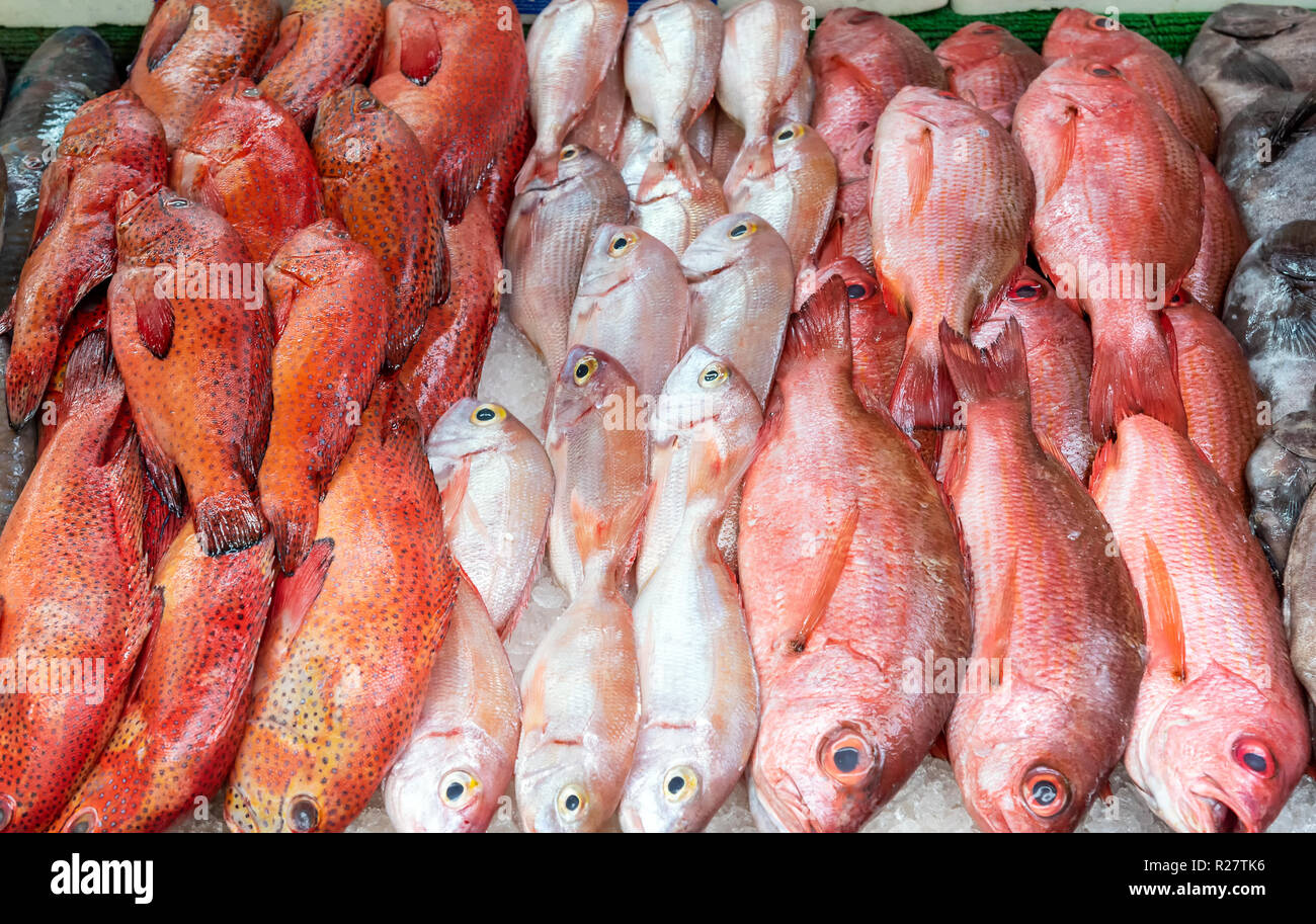 Red snapper and red mullet for sale at a market Stock Photo