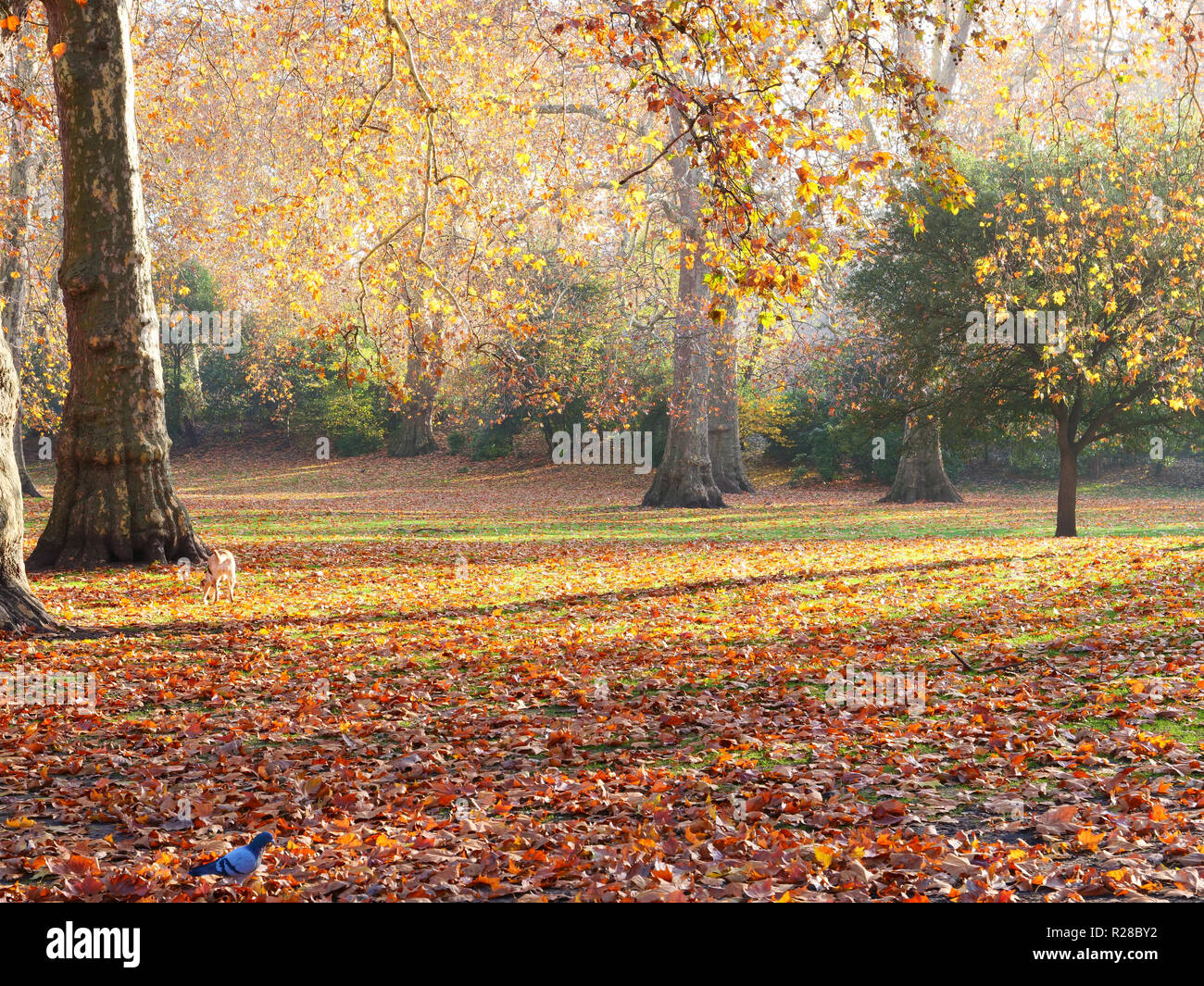 London, UK. 17th November, 2018. This weekend is an excellent opportunity to go out for a nice walk in any of the parks and open spaces of London, to enjoy the fresh, sunny weather and colourful autumn leaves. Credit: Joe Kuis / Alamy Live News Stock Photo