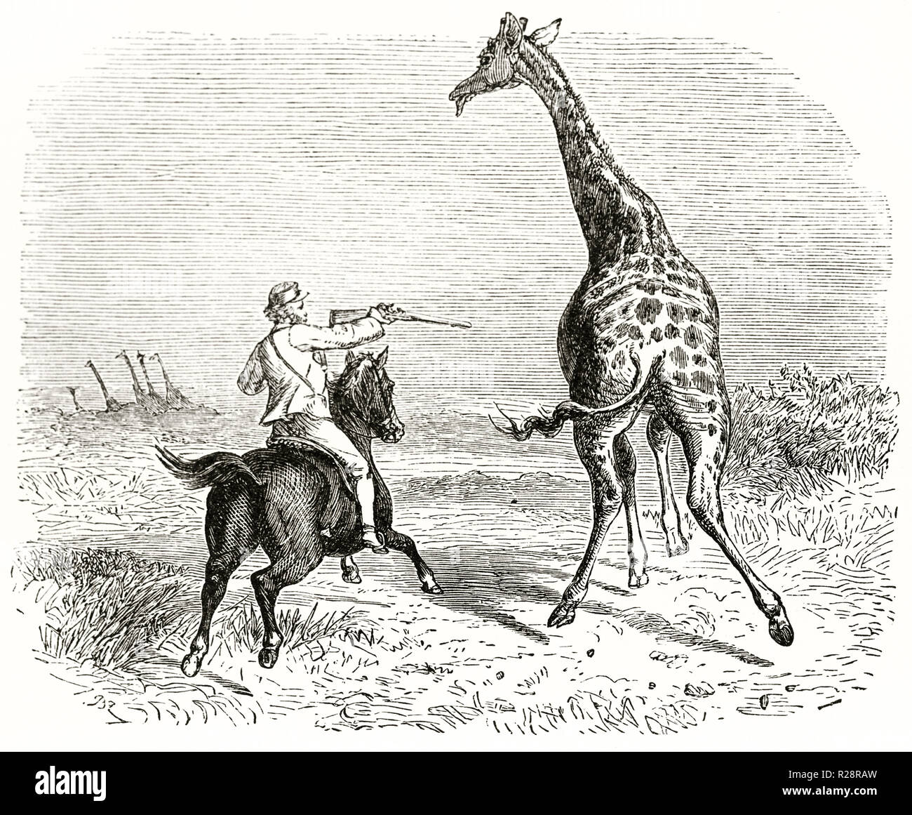 Old illustration depicting hunter Charles Baldwin hunting giraffe. By unidentified author, publ. on le Tour du Monde, Paris, 1863 Stock Photo