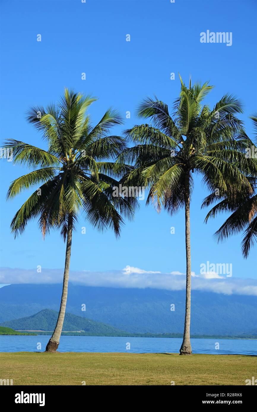 Palm Trees in Port Douglas, Far North Queensland, Australia - Stock Image