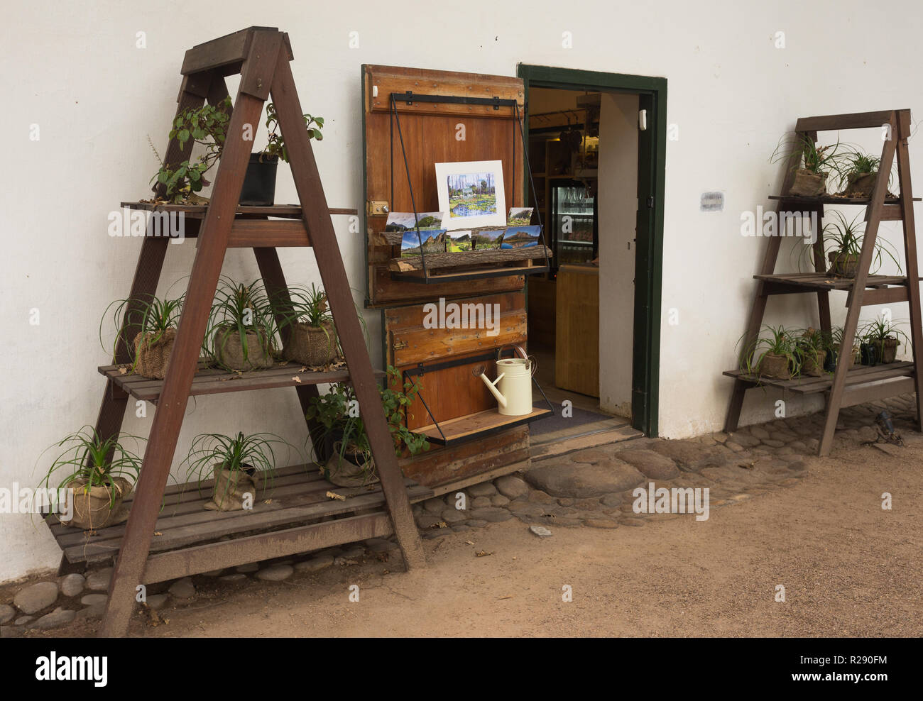 Wooden shelving or display unit, A-shape, outside opened door of shop holding potted plants or pot plants as decor on a shelf - Stock Image