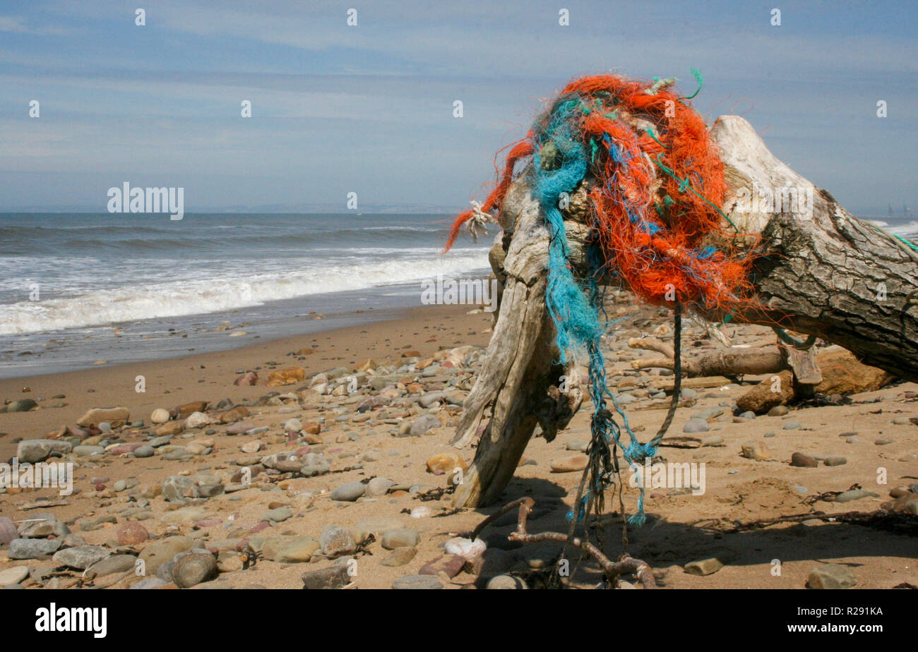 A large piece of driftwood washed up on a beach in South Wales, UK with old fishing rope rubbish/litter attached to it. Stock Photo