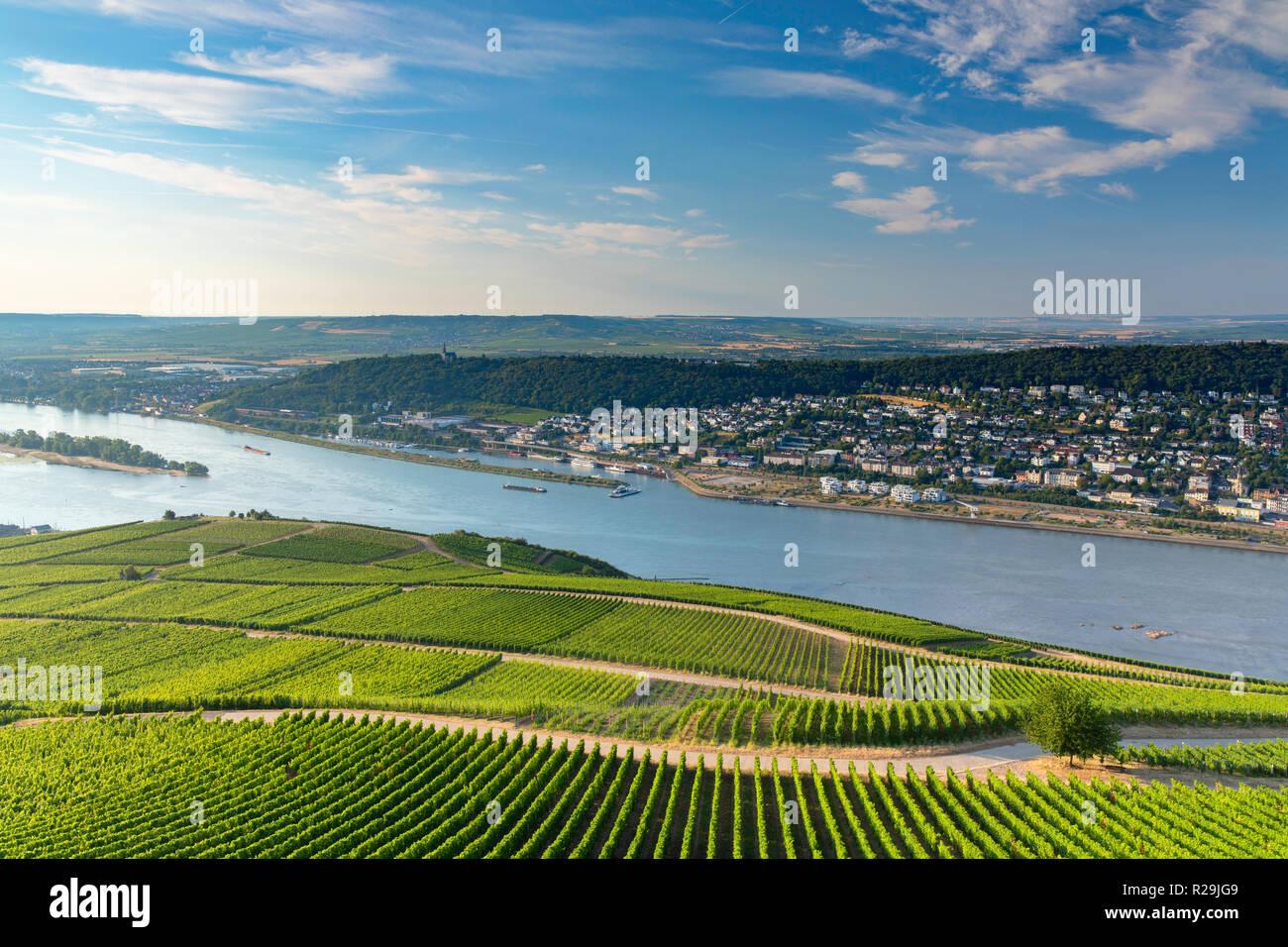 Vineyards and River Rhine, Rudesheim, Rhineland-Palatinate, Germany - Stock Image