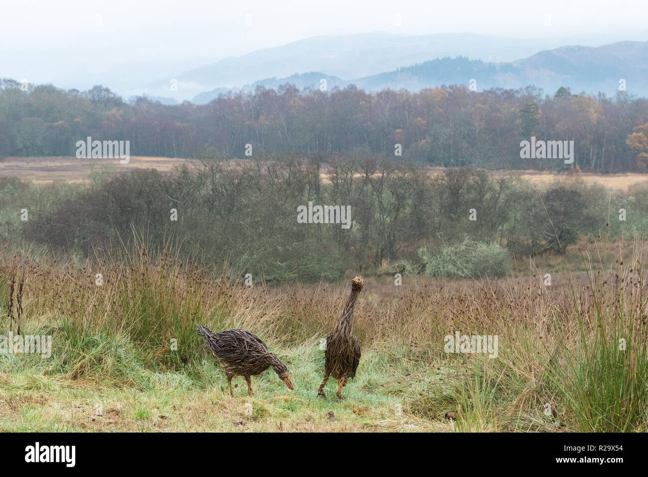 RSPB Loch Lomond visitor centre - willow geese sculptures - Stock Image