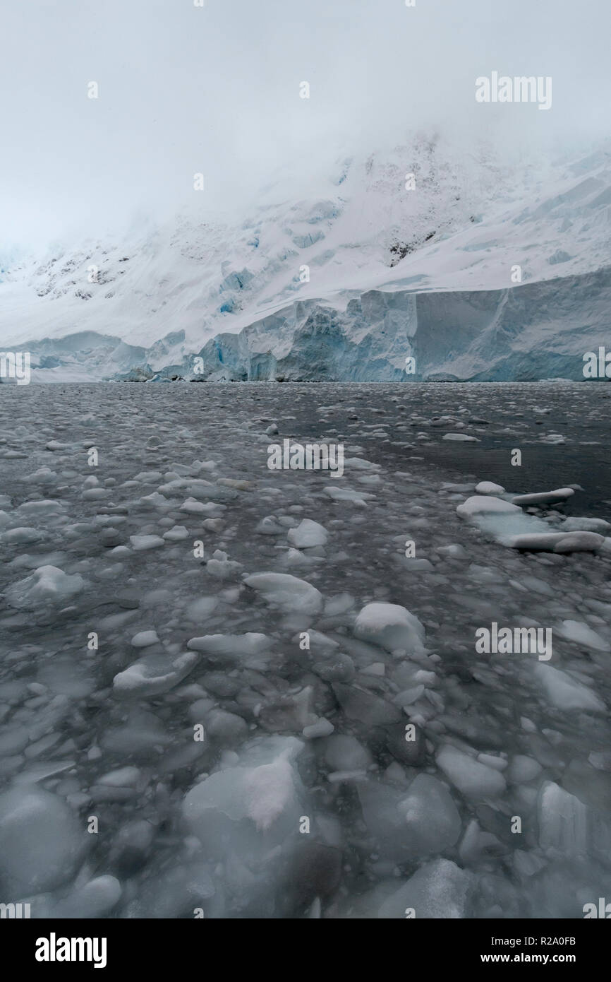 ice flow and ice bergs leading to ice cliffs antarctic peninula antarctica - Stock Image