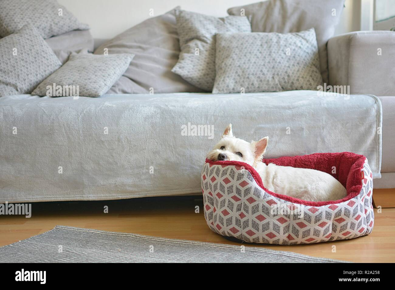 the dog lies in his dog bed - Stock Image