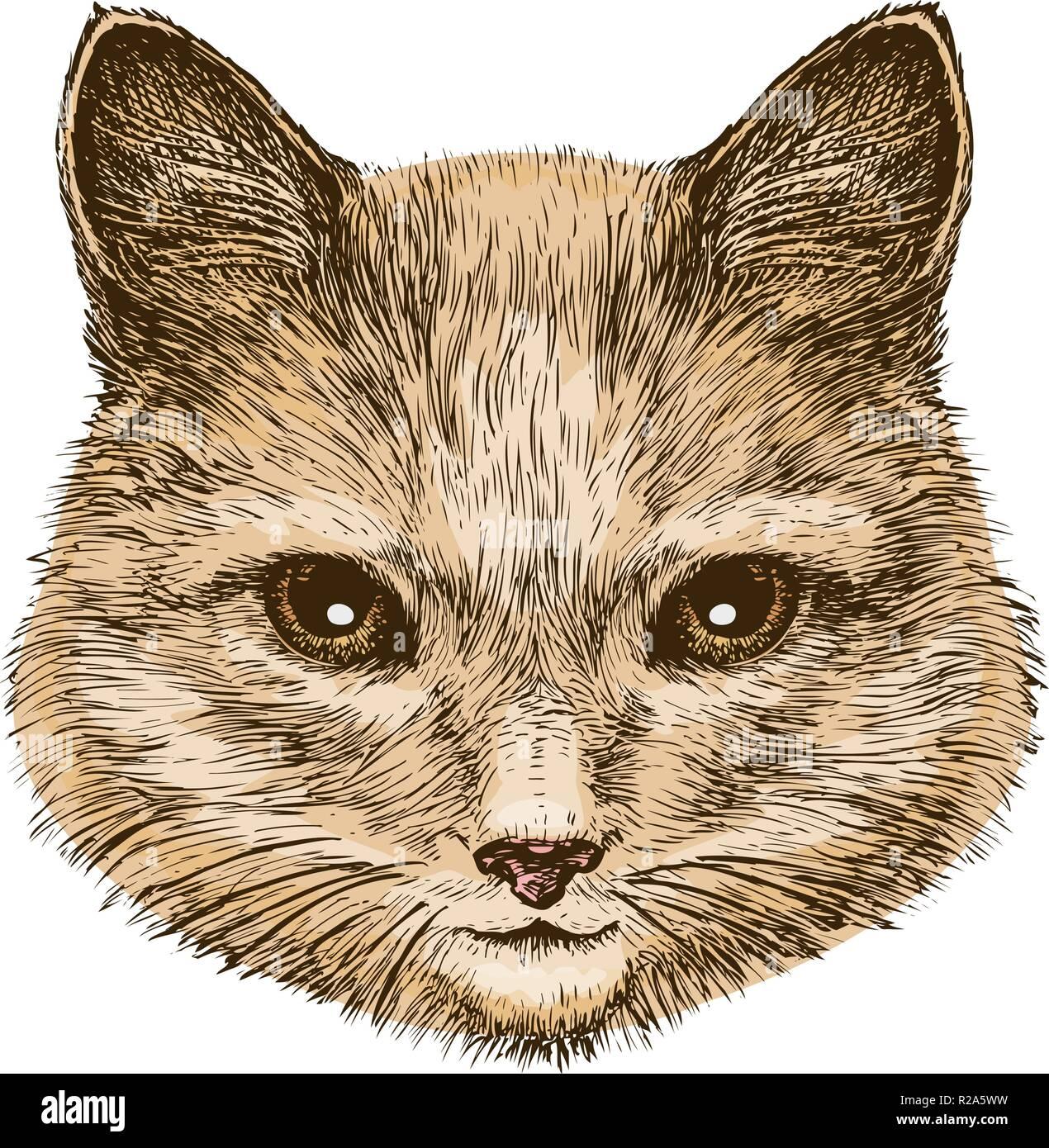 Portrait of a fluffy cat. Sketch vintage vector illustration - Stock Vector