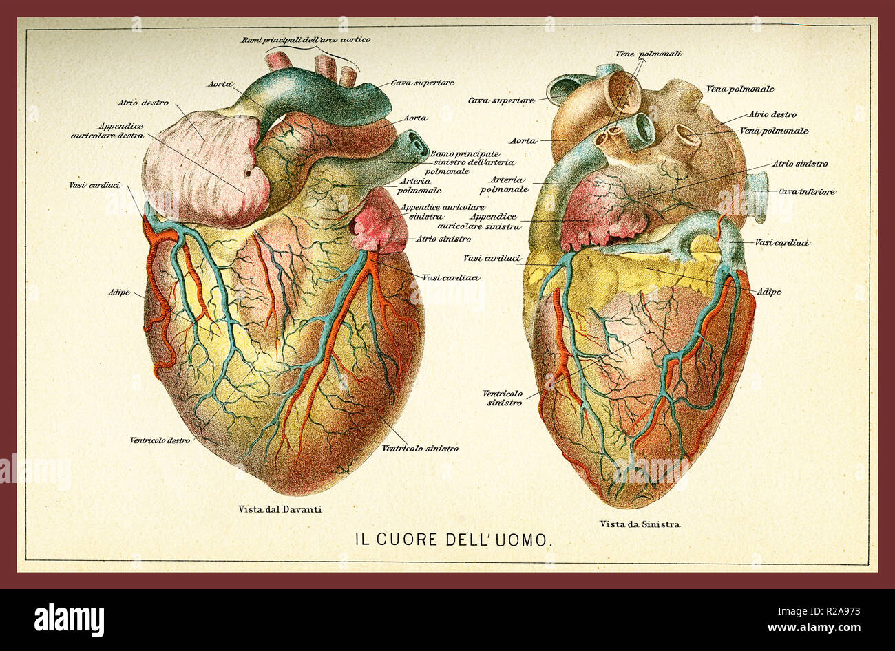 Vintage color table of anatomy, human heart with  anatomical descriptions in italian Stock Photo
