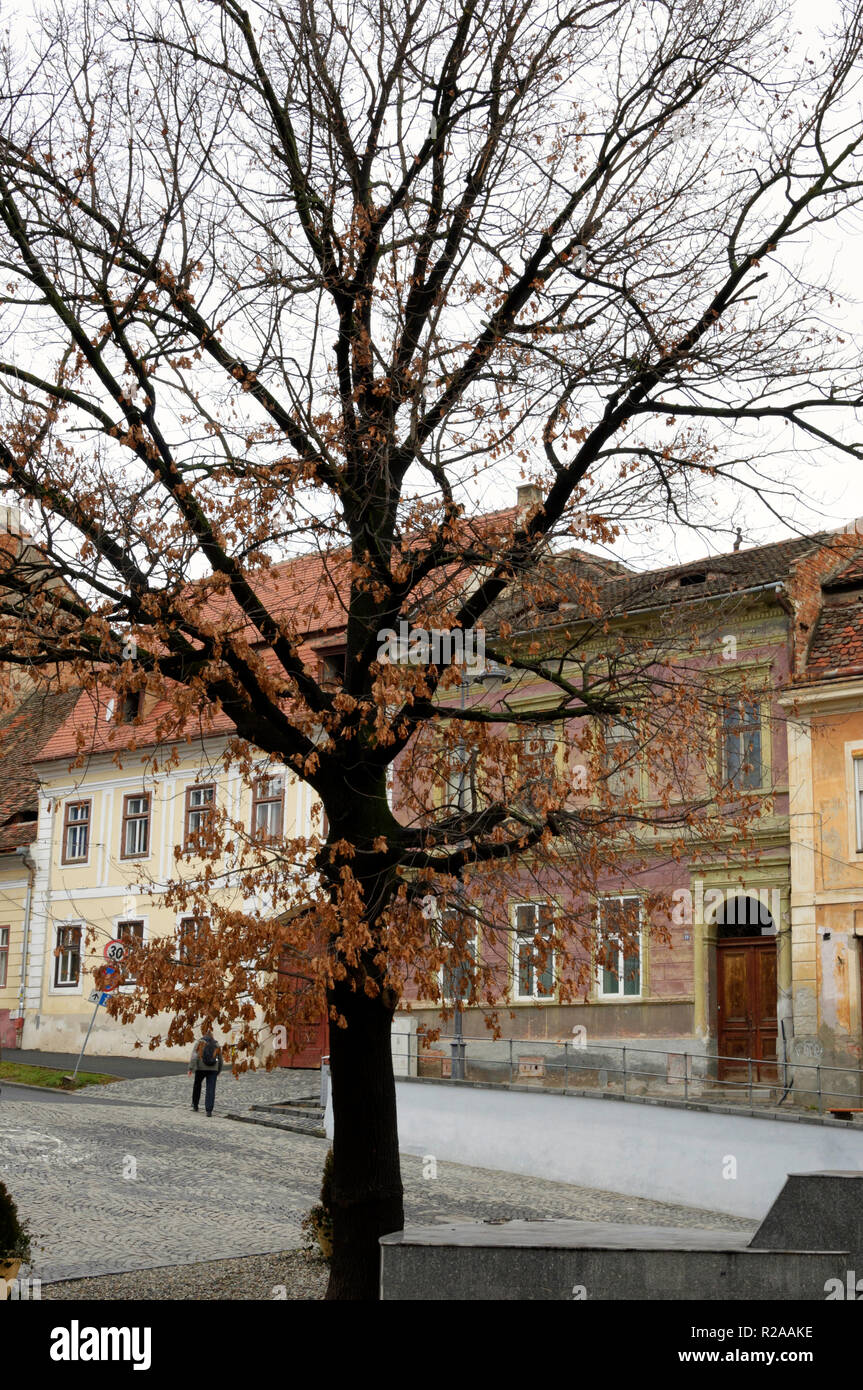 A beautiful winter scenery with a tree in a small square in Sibiu's old town, Romania Stock Photo