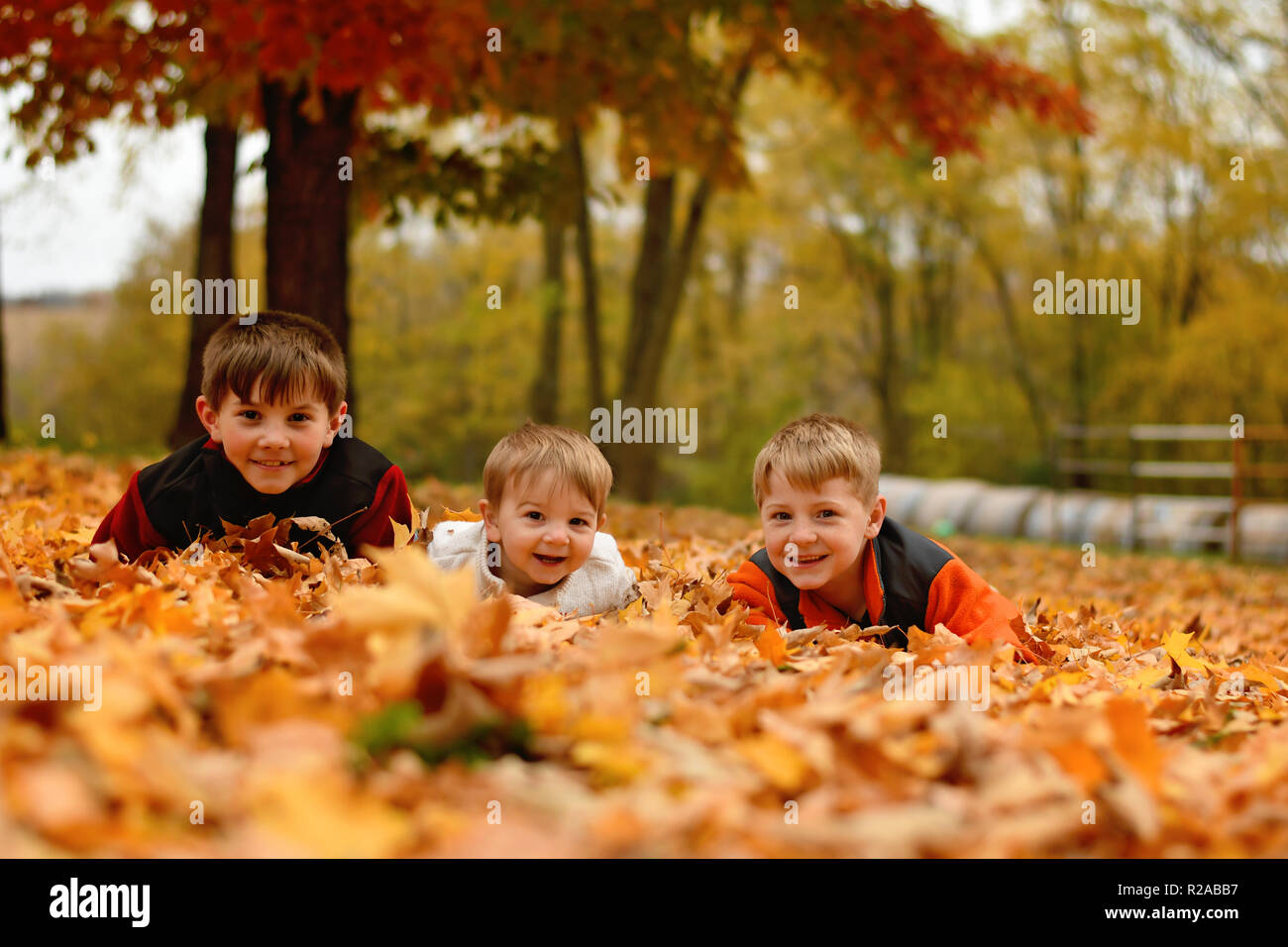three boys playing in the Autumn leaves in the country - Stock Image