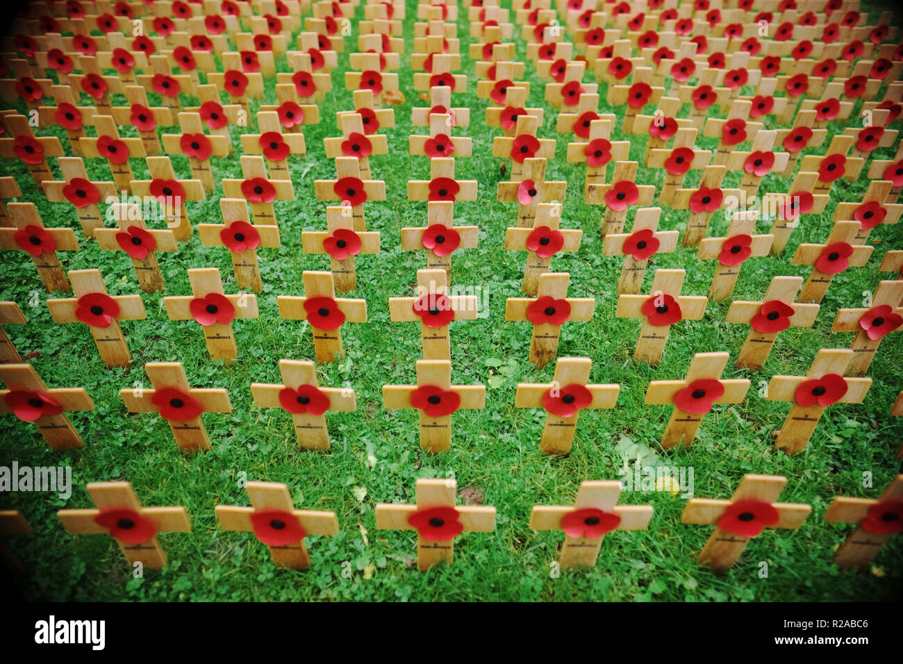 Remembrance Day field of wooden crosses with poppies on Remembrance Sunday UK 2018 - Stock Image