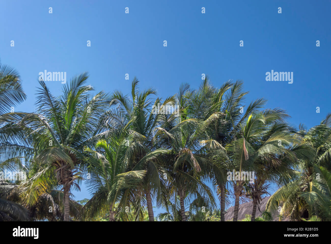 View at palm trees on the island of Mussulo, Luanda, Angola... - Stock Image