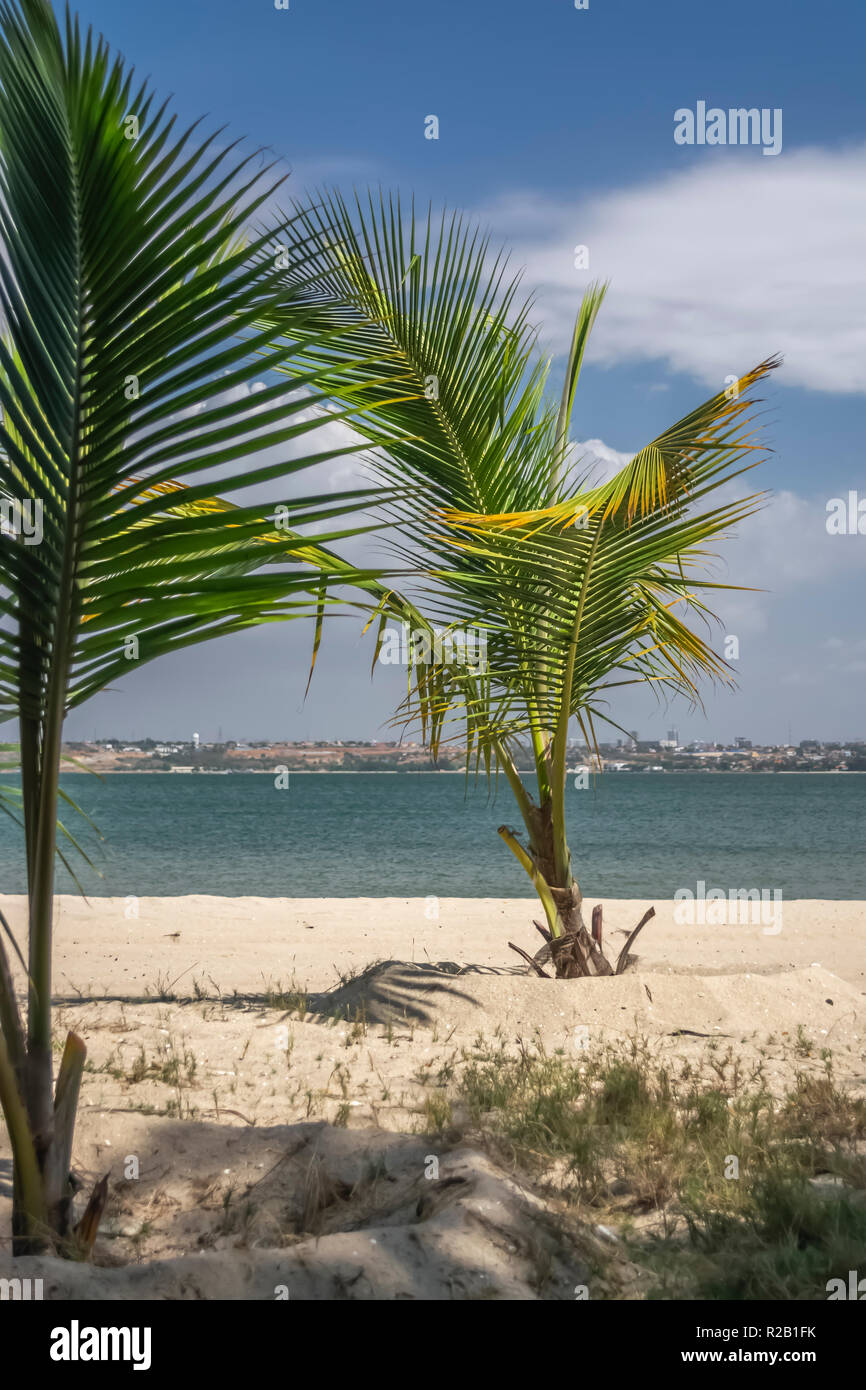 View of palm trees on beach, on the island of Mussulo, Luanda, Angola... - Stock Image