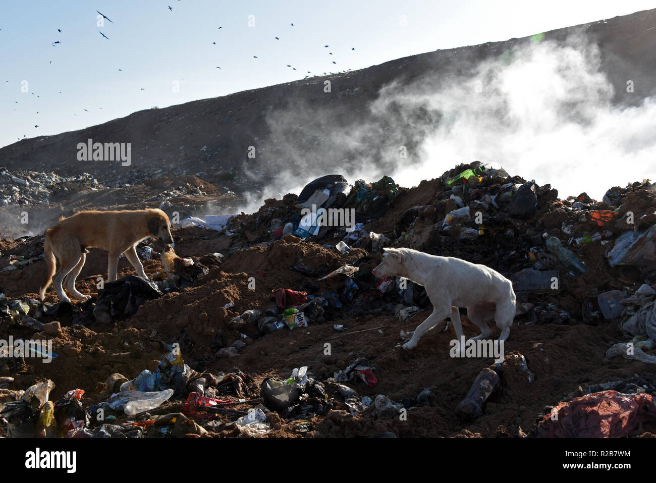 The town dump is on fire in the Astrakhan, Russia - Stock Image