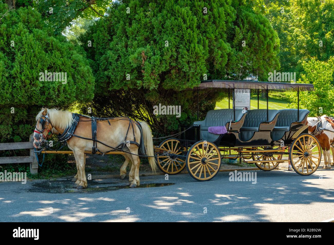 Horse-drawn carriage, Lexington Carriage Company, Lexington, Virginia Stock Photo