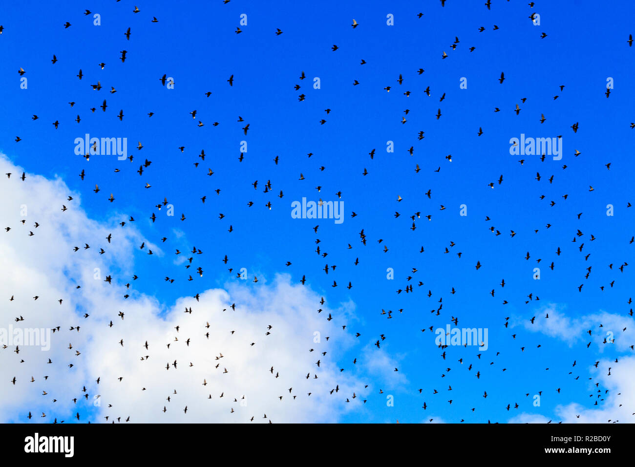 birds fly over our head Stock Photo