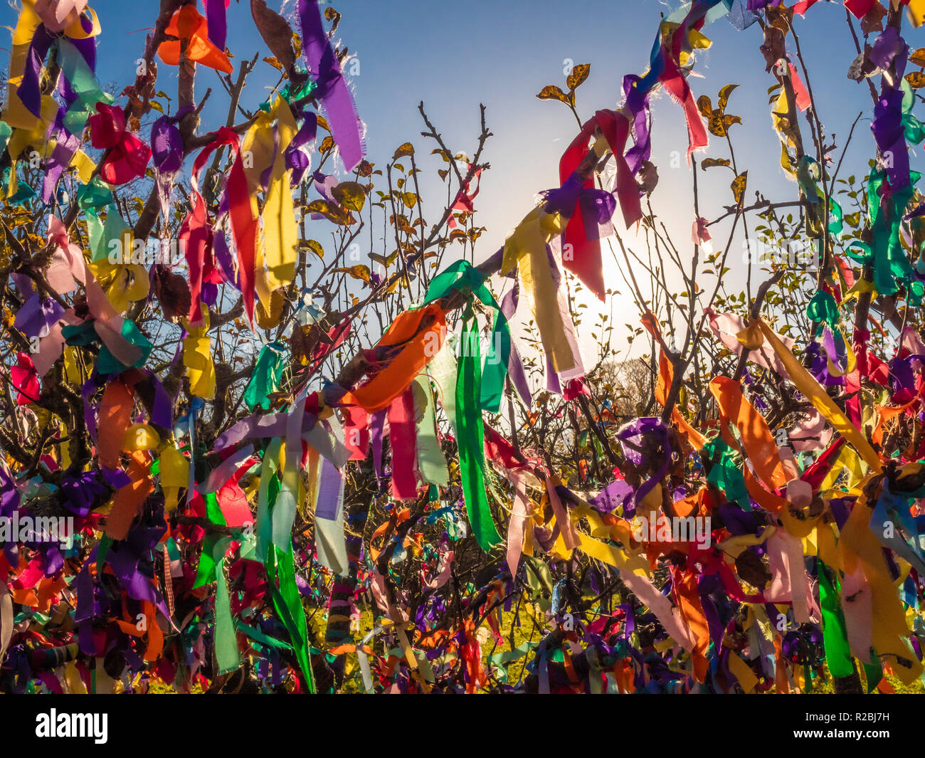 Brightly coloured ribbons tied onto branches of tree outdoors - Stock Image