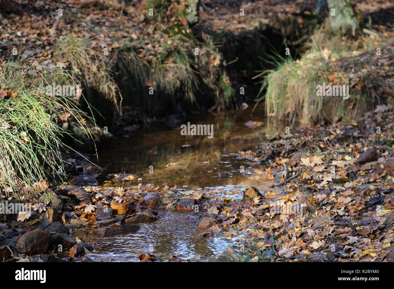 Small forest stream in Autumn - Stock Image