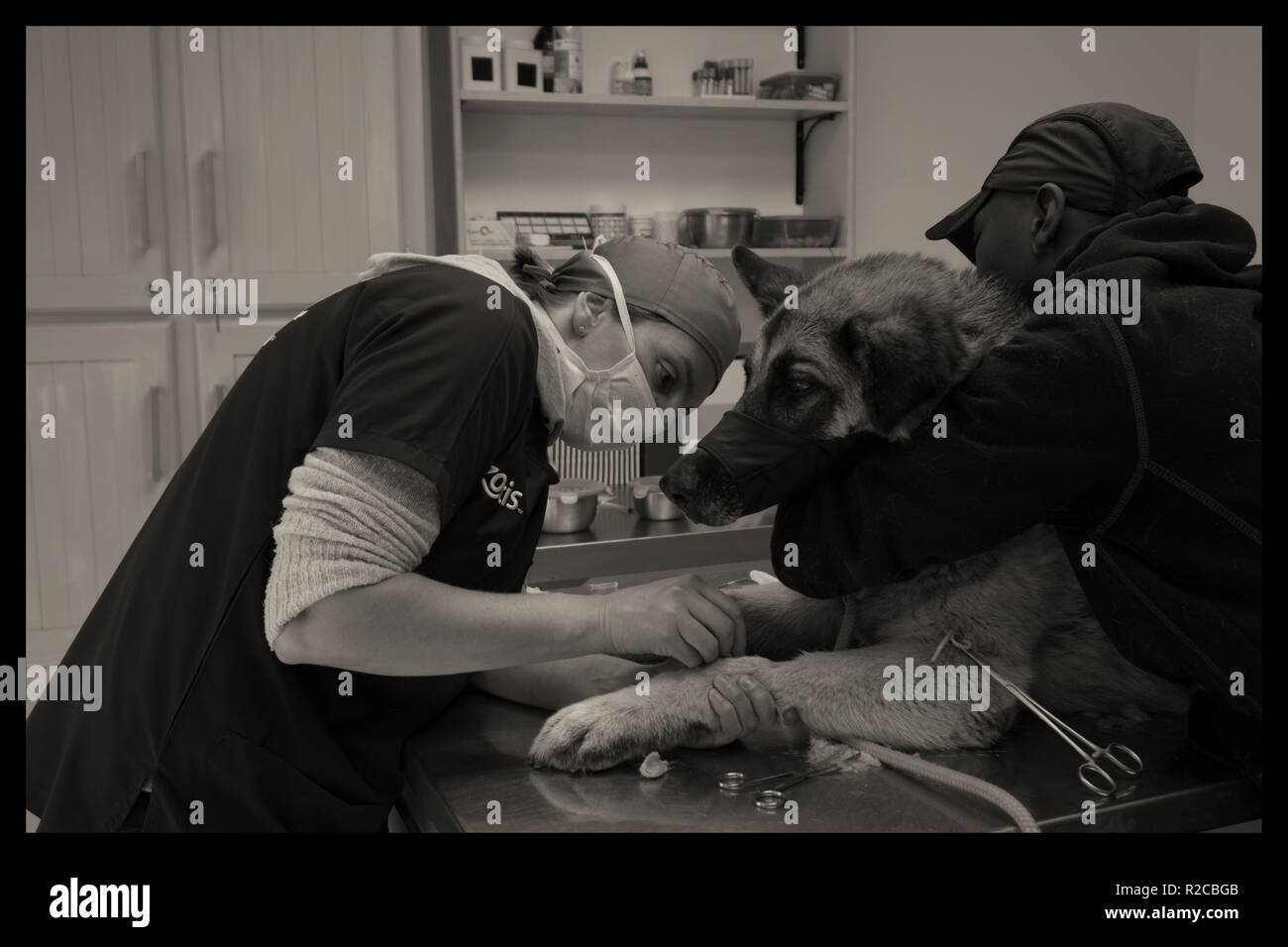 Vet at work - Stock Image