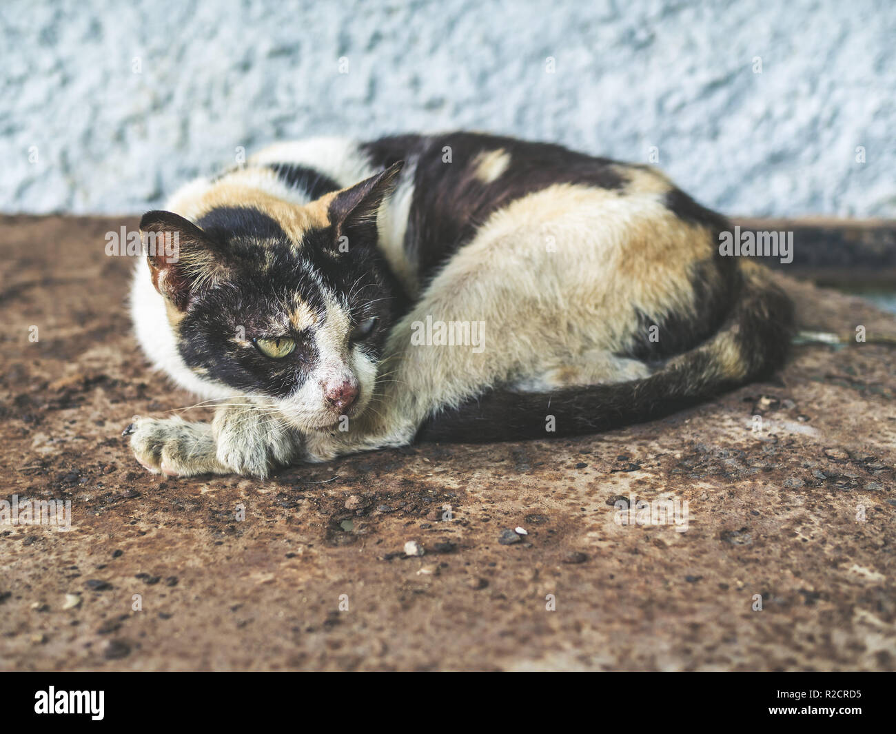 Three colors homeless blind cat. Dirty lonely cat looking something on rust ground. Stock Photo
