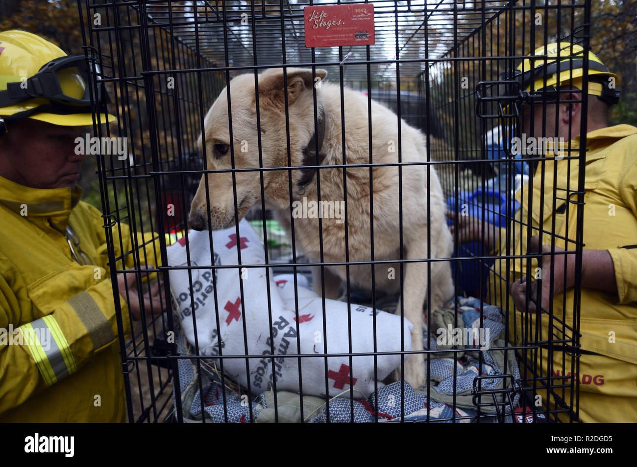 Magalia, California, USA  18th Nov, 2018  Animal rescue team