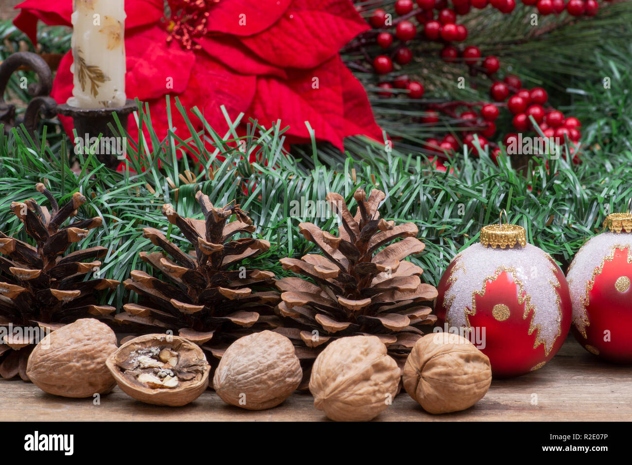 0017a4cb8c90 Winter holiday decoration: Blooming Red Poinsettia, Pine, Berry bush ...