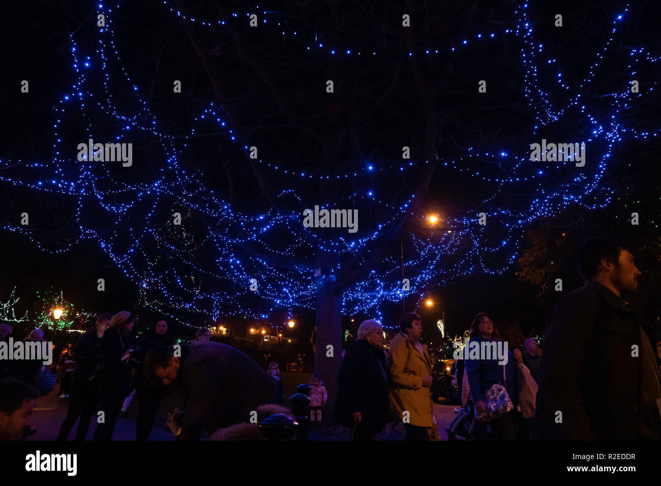 Tree with ornamental blue illuminated lights with people walking underneath,Montpellier Quarter,Harrogate,North Yorkshire,England,UK. - Stock Image