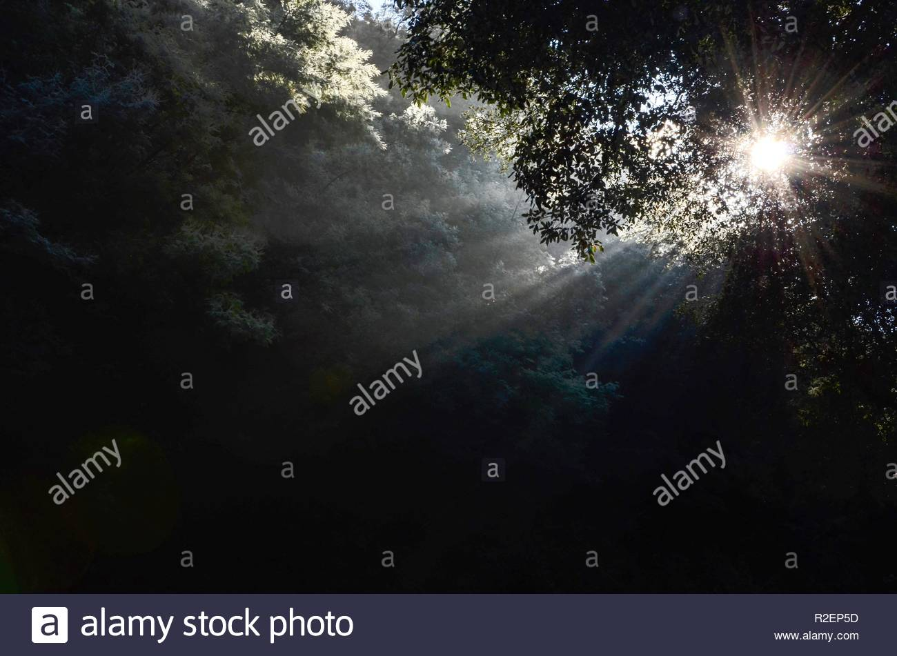 Sunlight beams through forest in winter, hope, grief, nature, light, trees, sky, lonely, end, aim, december, weather, cold, season, warmth - Stock Image