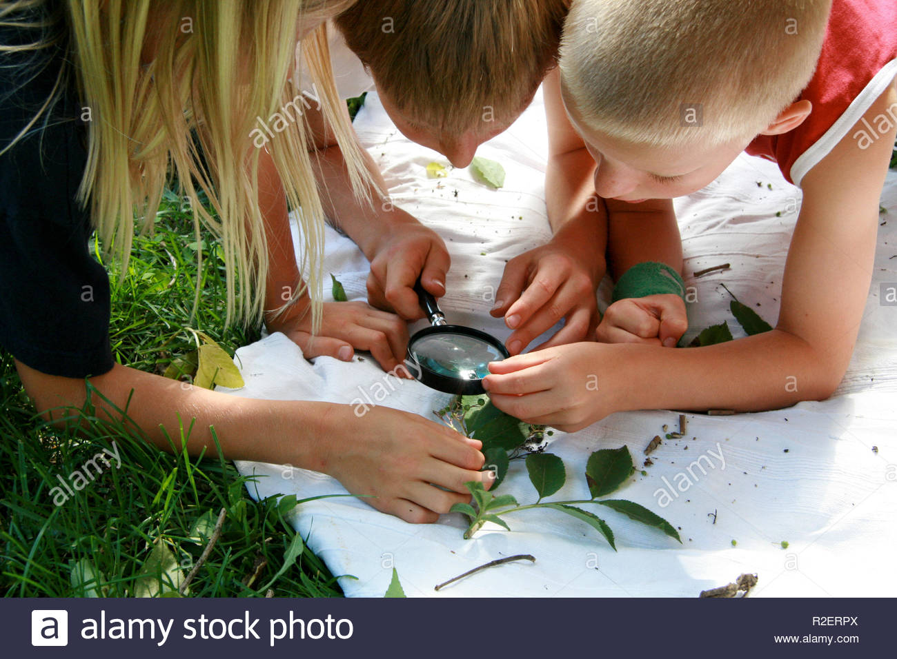 Children's views leaves with a magnifying glass Stock Photo