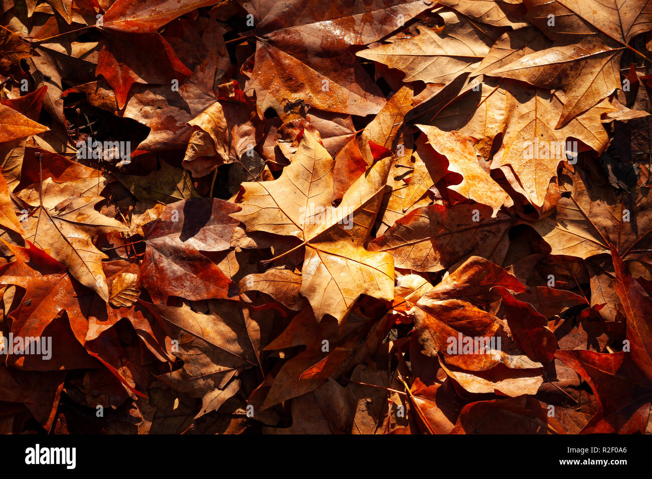 Background of autumnal leaves Stock Photo