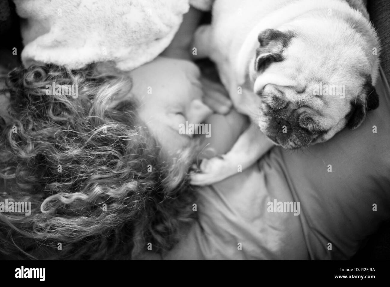 friendship concepts for 40s woman sleeping with her best friend pug dog at home. Both on the pillow and brown warm tones. Dreaming together. romantic black ad white concept image - Stock Image