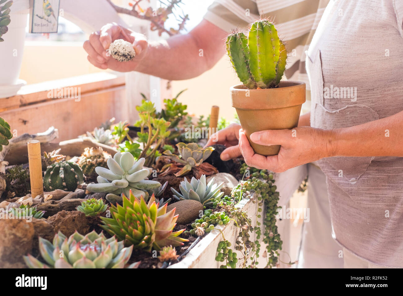 garden and plants carefree. tropical vgetation at home. couple of senior caucasian adults mature take care of plants at home. shop concept and loving nature - Stock Image