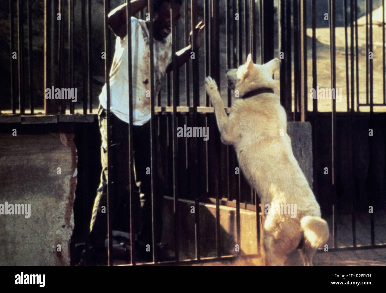 White Dog  Year : 1982 USA Director : Samuel Fuller Paul Winfield - Stock Image