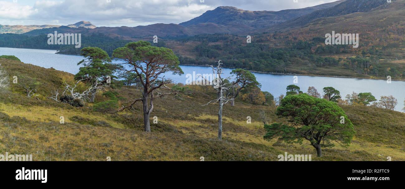 Loch Affric,  Glen Affric, Highlands, Scotland. - Stock Image
